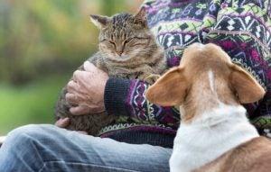 Kissa ja koira, kissa ihmisen sylissä