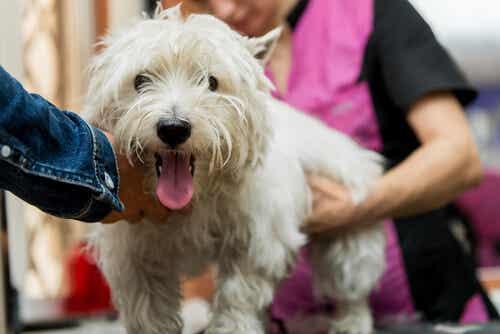 Koiran rokotukset: Mitä rokotuksia lemmikkini tarvitsee?