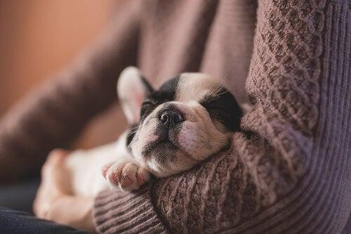 Koiran tarranauhasyndrooma: Kun eläin takertuu omistajaansa