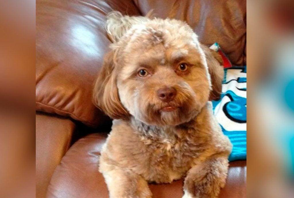 Tässä on Yogi, ihmiskasvoinen koira