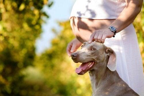 Koiran omistamisen hyödyt raskauden aikana