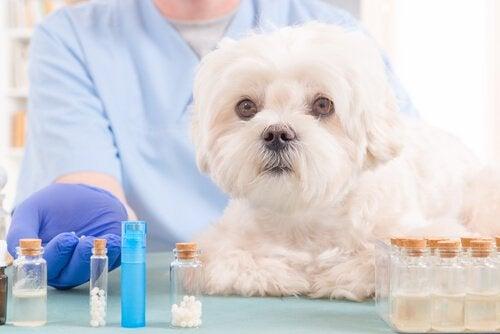 Luonnolliset öljyt koiran ensiapulaukkuun