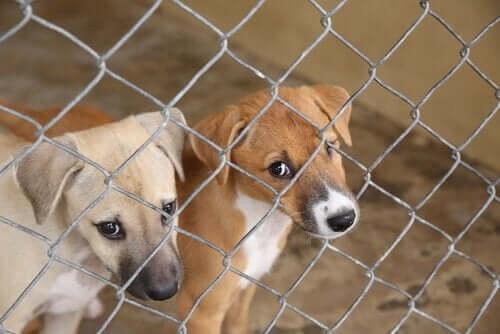 Yli 100 koiraa pelastettiin laittomalta kasvattajalta