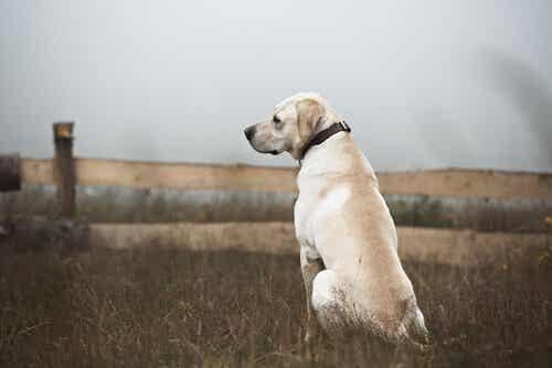 Kuinka tulee toimia, kun kohtaa kodittoman koiran?