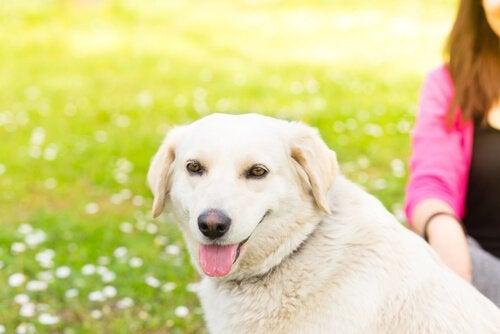 5 asiaa, joista koira ei pidä