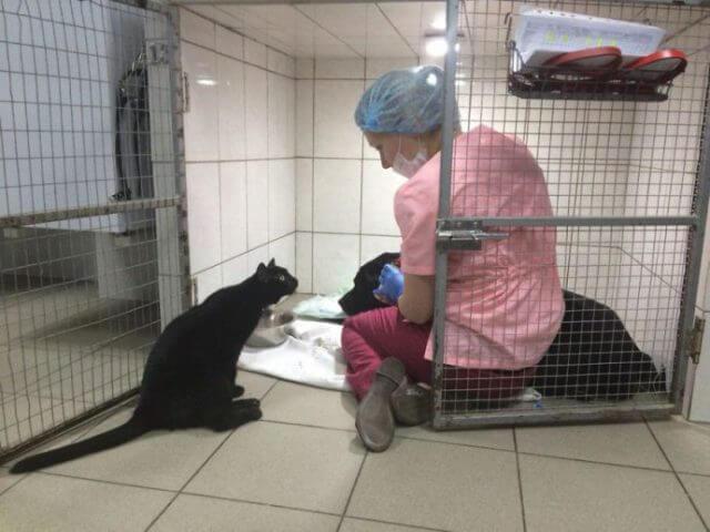 Halvaantunut Lucifer-kissa auttaa muita eläimiä
