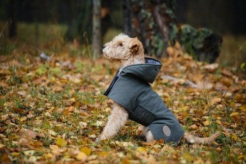 Valmista koiran sadetakki kotikonstein