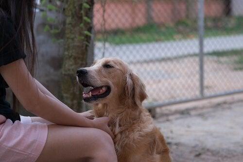 Pitääkö paikkansa, että koira ymmärtää ihmisen puhetta?