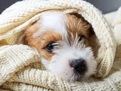 Milloin koiran eutanasia on oikea vaihtoehto?