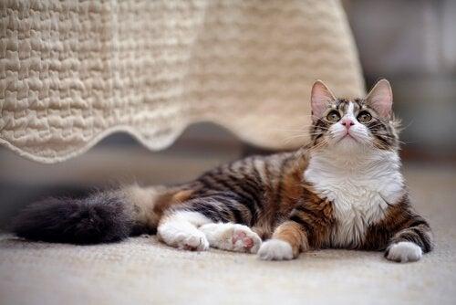 Kissan kanssa kodin jakaminen