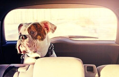 Koiran matkapahoinvoinnin estäminen
