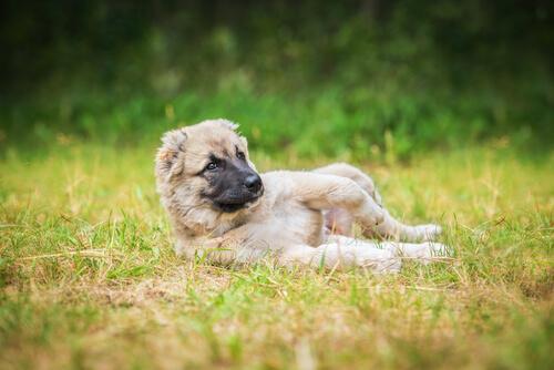 Koiranomistajan virheet lemmikkiä puistoon viedessä