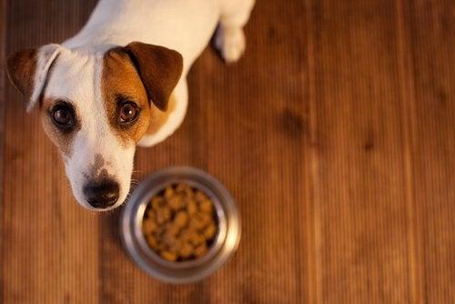 Kuinka selättää koiran ruoansulatusongelmat?