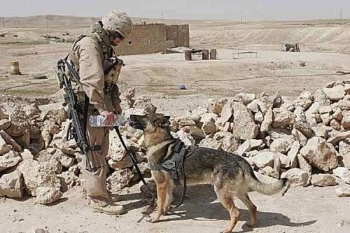 Kolme tositarinaa sotilaiden ja koirien välisestä ystävyydestä