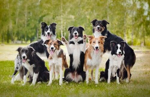 10 hauskaa faktaa koirista