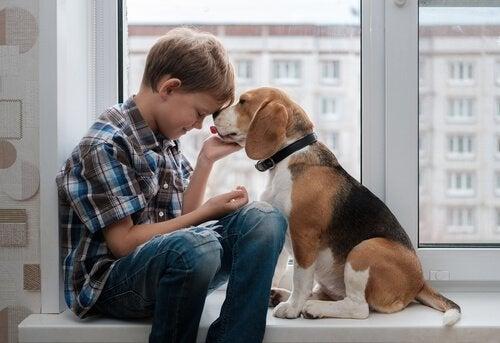 Beagle on älykäs ja herkkä koira