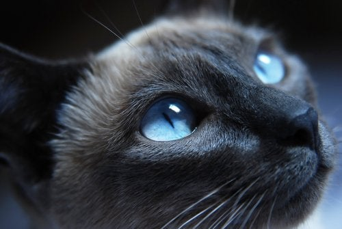 Tavallisimmat kissan ilmeet ja niiden syyt