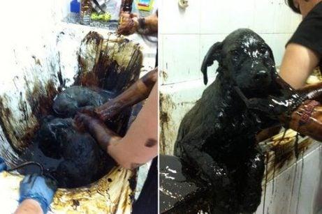 Tervaan kastetut koirat