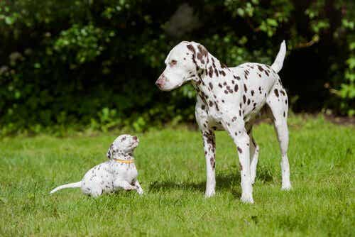 Ovatko nämä maailman ihastuttavimmat koirarodut?