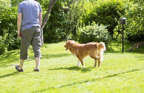 Miksi koira seuraa omistajaansa varjon lailla?