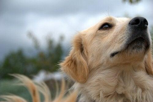 Koiran turkin harjaaminen - miksi ja miten?