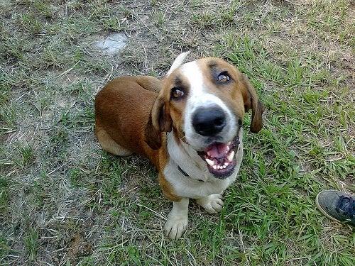Omistajaansa vihaavat koirat – onko sellaisia olemassa?