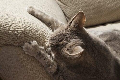 Kissa raapii huonekaluja