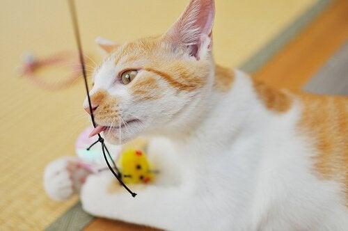 Kissan leikit ja liikunta