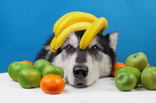 Parhaat hedelmät koiralle tarjottavaksi