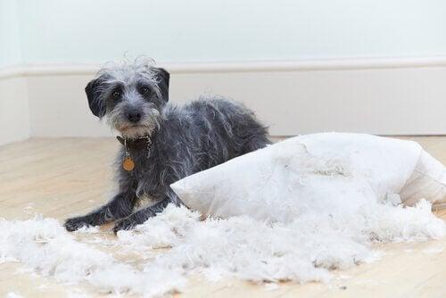 Koiran käytösongelmat: 6 tavallista häiriötä