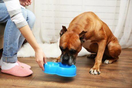 Tärkeät ravinteet ikääntyvälle koiralle