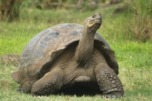 Maailman pitkäikäisimmät eläinlajit