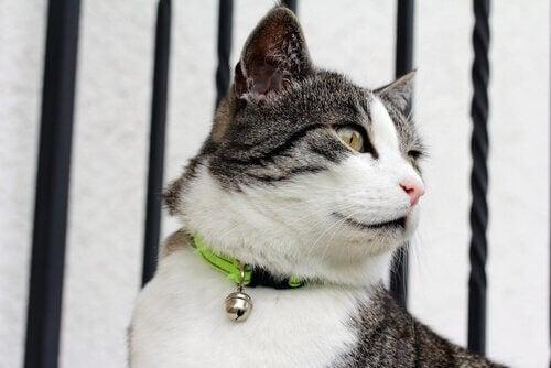 Kannattaako kissan käyttää kaulapantaa?