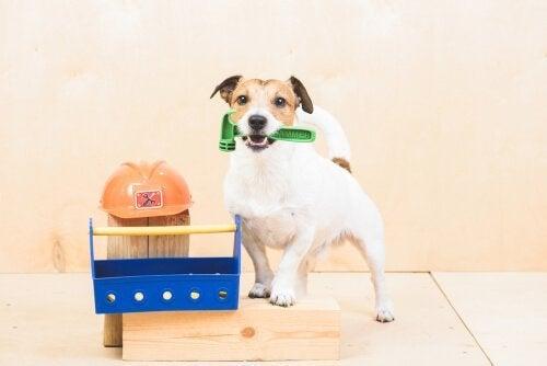 Erilaisten tehtävien opettaminen koiralle: Mitä kaikkea lemmikkiä voidaan pyytää tekemään?