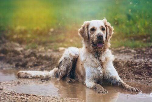 Eroon märän koiran hajusta