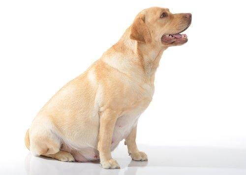Mikä on parasta ruokaa koiralle?
