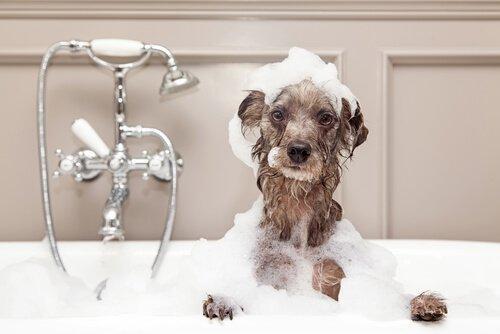 Koiran pesu talvella