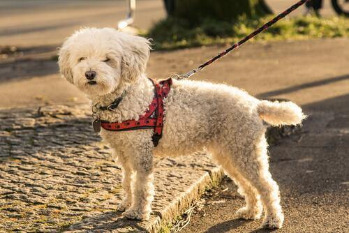 5 myyttiä koirien valjaisiin liittyen