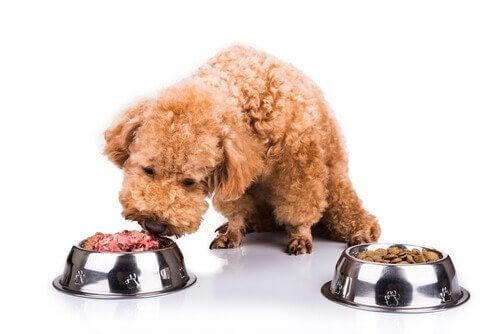 Millainen luonnollinen ruoka sopii koiralle?