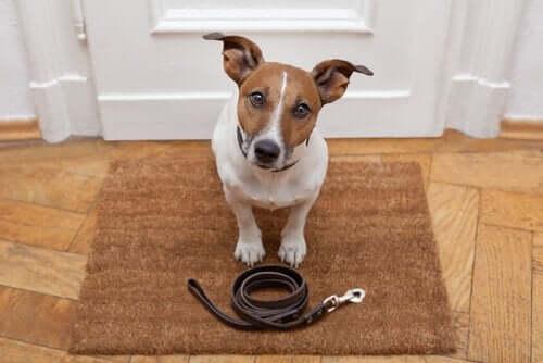 Koiran opettaminen päivittäisillä kävelylenkeillä