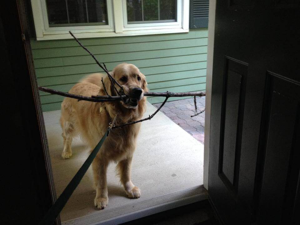 Koira leikkii kepin kanssa