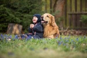 Harrastuskonsultti: Keskikokoinen ja lapsiystävällinen koira?