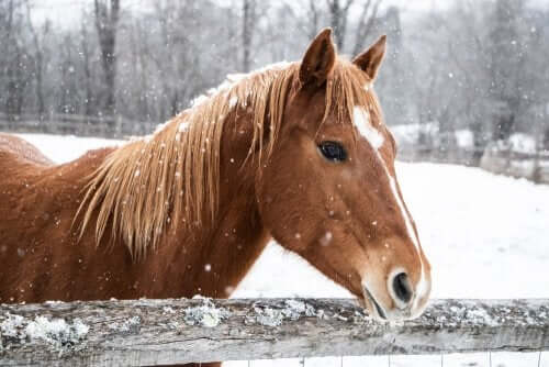 Hevosen hoito talvella