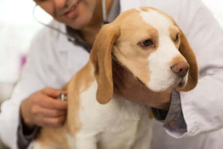 Koirien yleisimmät matotartunnat ja niiden hoito