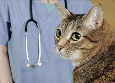 Kissa eläinlääkärissä