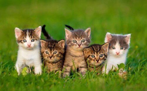 Kuinka valita itselle sopiva kissa lemmikiksi?