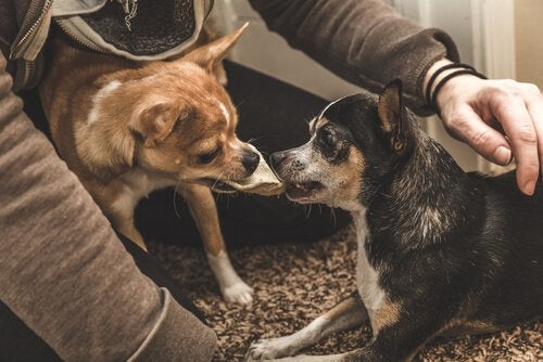 Tuntevatko koirat kateutta?