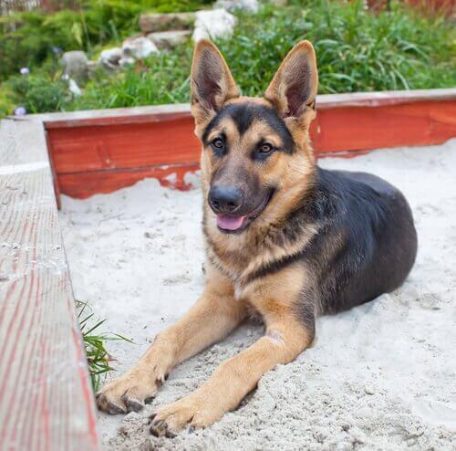Onko koiran hiekkalaatikko missään tilanteessa hyödyllinen?