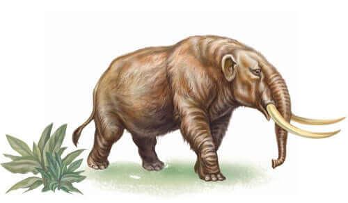 Millainen eläin oli sukupuuttoon kuollut mastodontti?