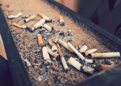 Tupakansavu vaikuttaa eläimiin haitallisesti